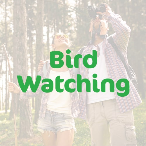 bird-watching-featured