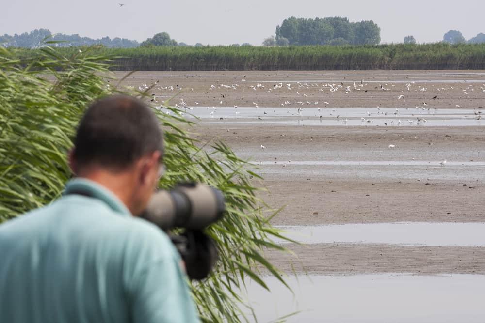 bird watching scope