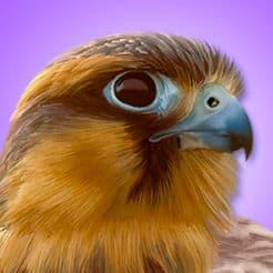 5 Best Bird Watching Apps for Beginners and Seasoned Birders