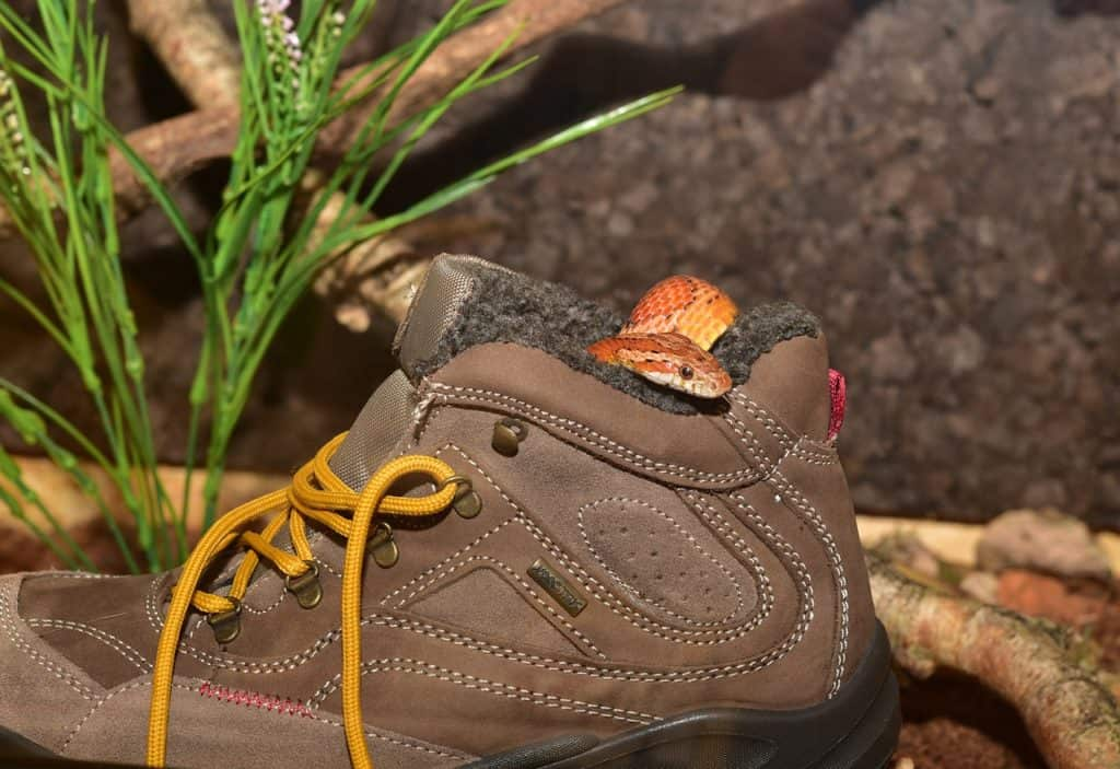 snake in hiking boot