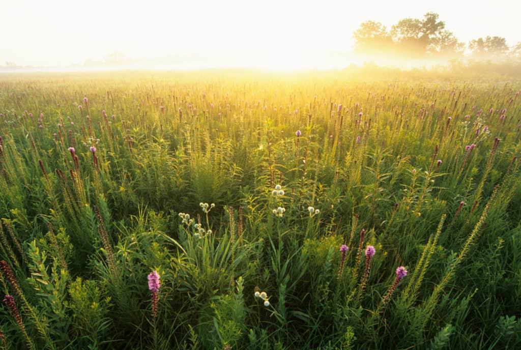 Midewin National Tallgrass Prairie