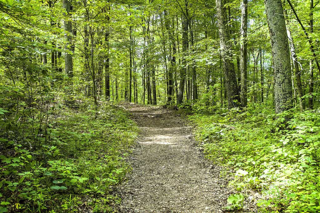 Charles Deam Wilderness