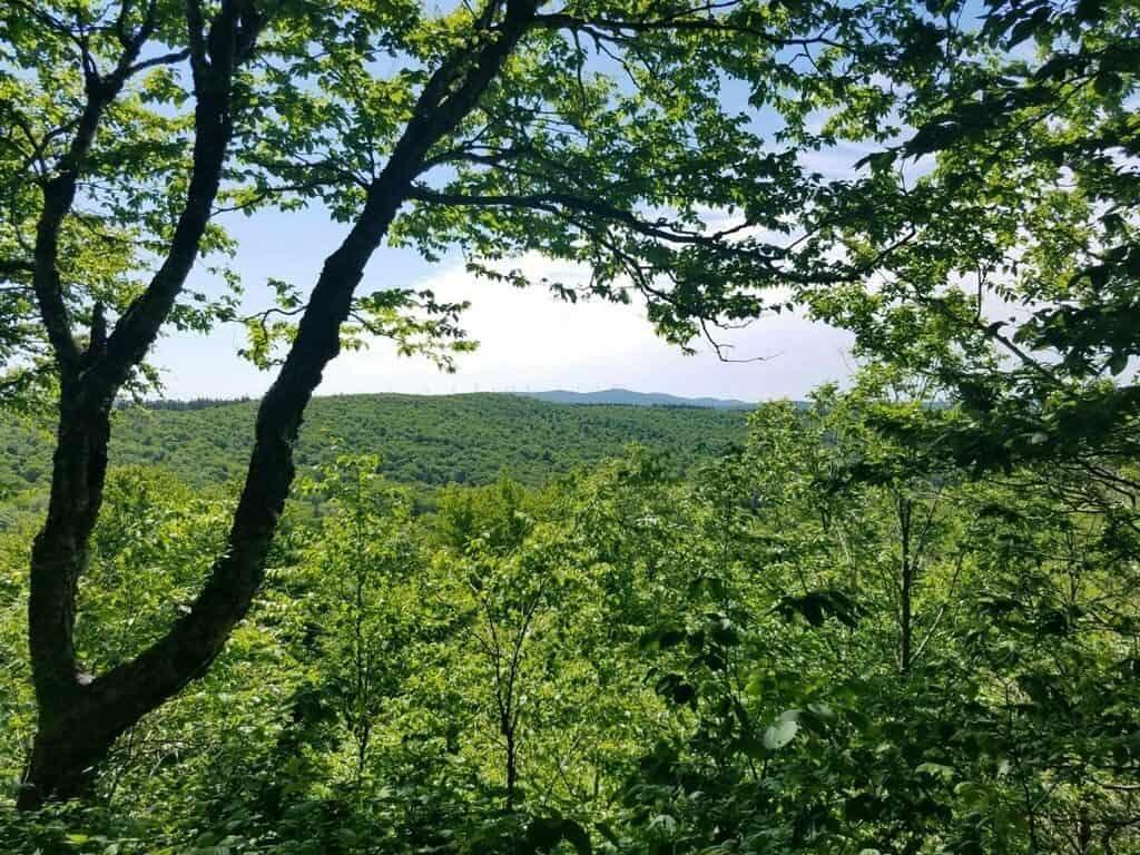 Glastenbury Mountain Appalachian Trail