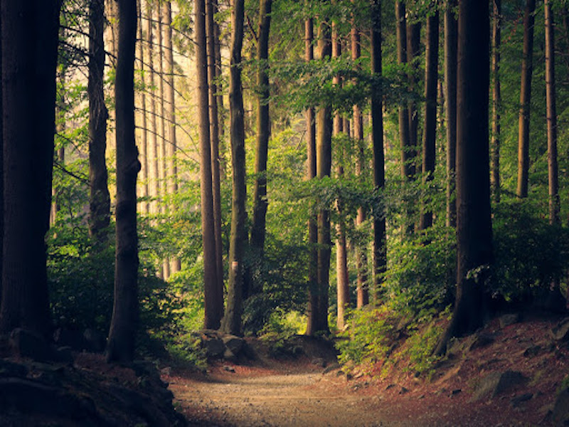 Woods and Footpaths