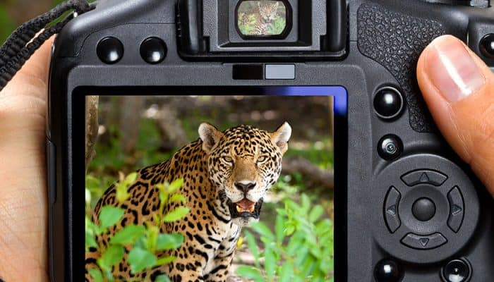 8 Best Cameras for Wildlife Photography