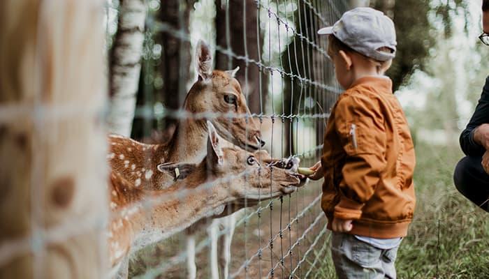 kids zoo