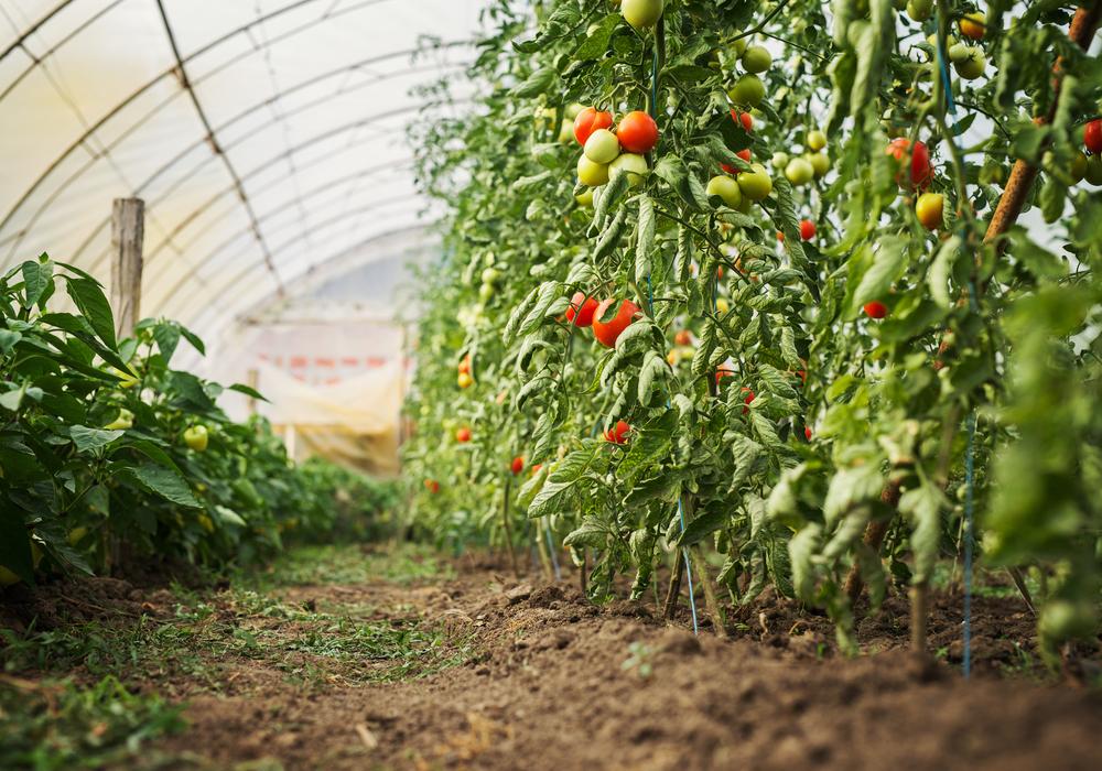 visit-a-greenhouse